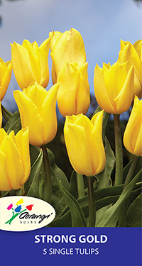 Tulip Strong Gold, pack of 5